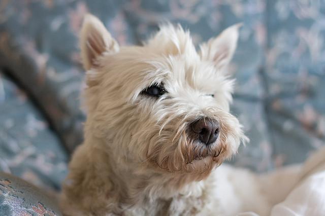Hondenpoep In Tuin : Gemeente overal zelf hondenpoep opruimen oog radio en televisie
